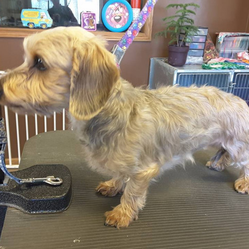 pet grooming north branch mn