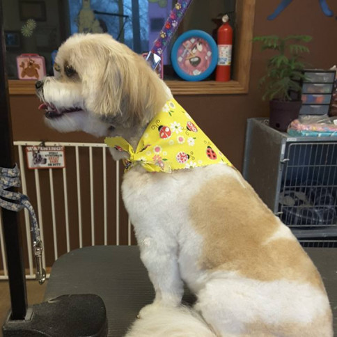 dog grooming north branch mn